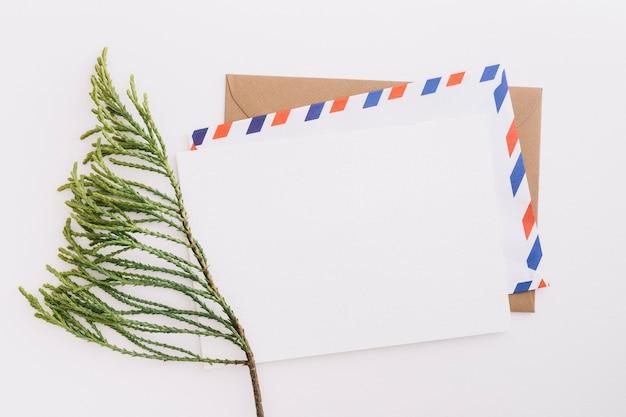 白い背景に郵便封筒とシダーの小枝