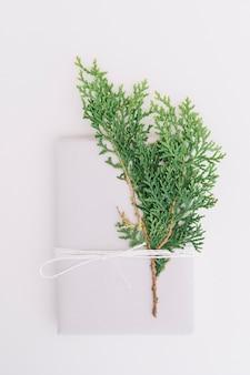 杉の葉は結ばれ、白い背景に紐で結ばれた封筒