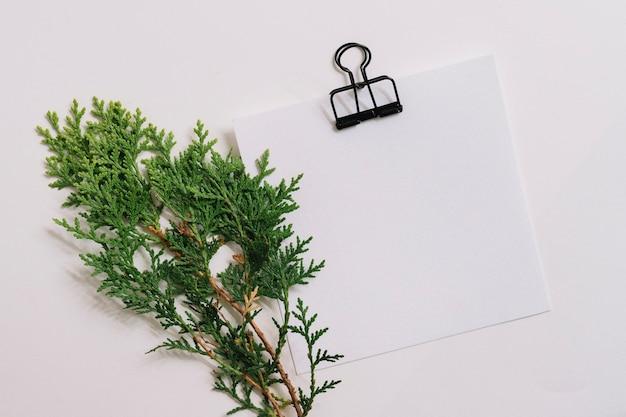 白い背景に紙クリップと白紙とシーダーの小枝