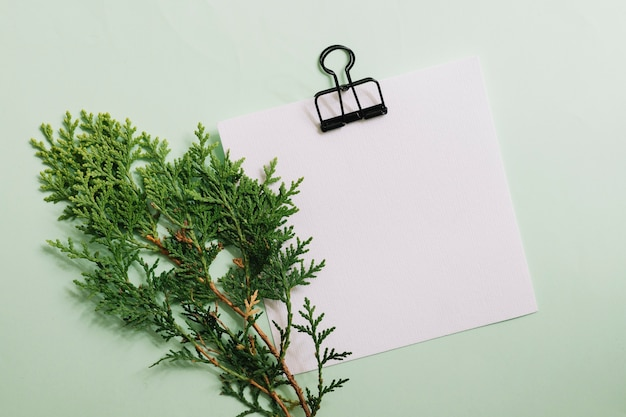 パステルの背景の上にクリップ付きの白い白い紙とシダーの小枝