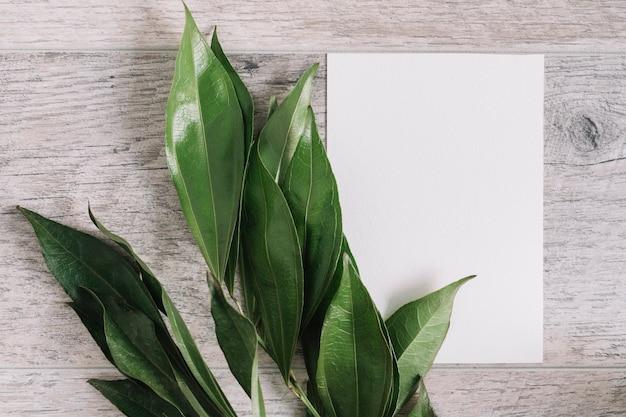 木製のテーブルに白い空の紙を使った新鮮な緑の葉のオーバーヘッドビュー