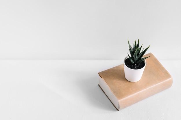白い背景に隔離された茶色の本に白い鉢植え