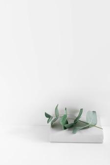 白い背景の本の上に緑の小枝