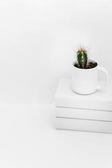 白い背景の本の積み重なったポットの多肉植物