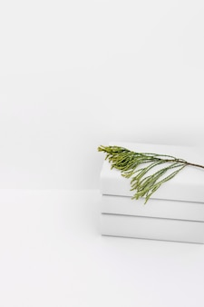 白い背景の白い本の積み重ねの上にシダーの小枝