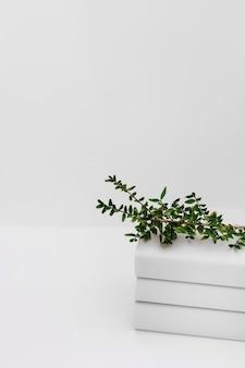 白い背景に対して積み重なった本の上に緑の木の枝