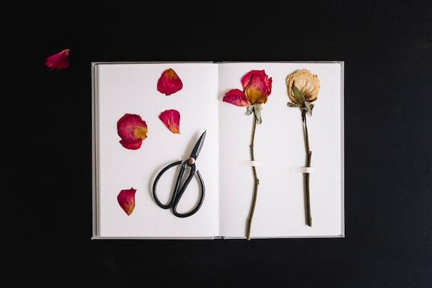 白い背景のはさみでノートブックの白いページに貼られた乾燥したバラ
