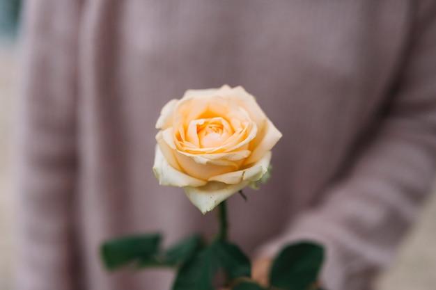 美しいバラの花を保持している人のクローズアップ