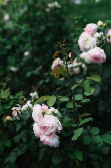 白い花の緑の葉のクローズアップ