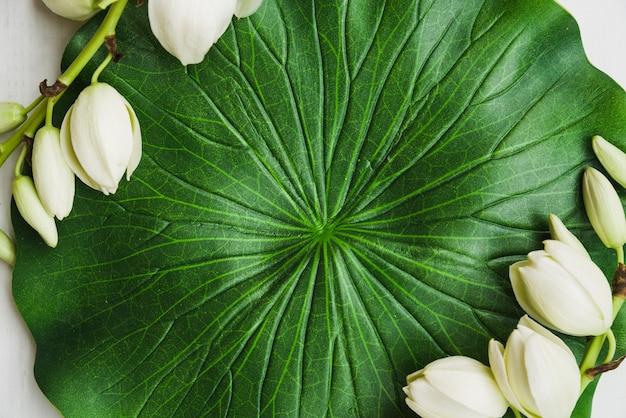 白い花と偽の蓮の葉のクローズアップ