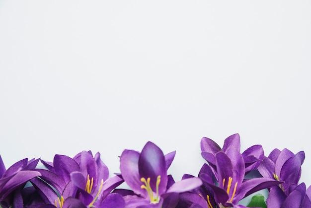 白い背景の上に置かれた下の紫色の花
