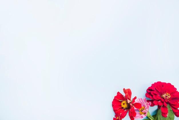ライトブルーの背景にカレンデラマリーゴールドの花