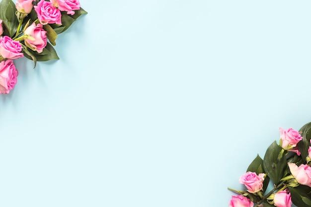 青い背景の端にピンクのバラの高い角度の光景