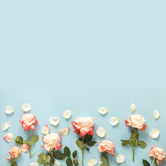 青い背景の下にバラの高い角度の光景