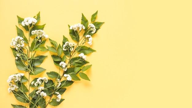黄色の表面に白い花の高い眺め