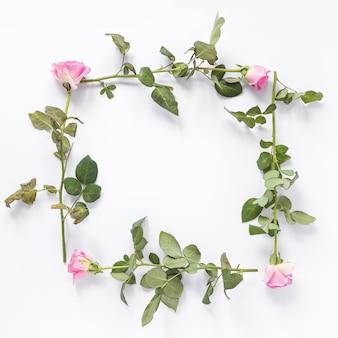 白い背景に正方形のフレームを形成するバラの花の高い角度のビュー