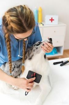 女性の獣医髪を滑らかなブラシで毛づくろい