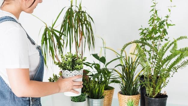 鉢植えの植物を店に並べる女性の花屋