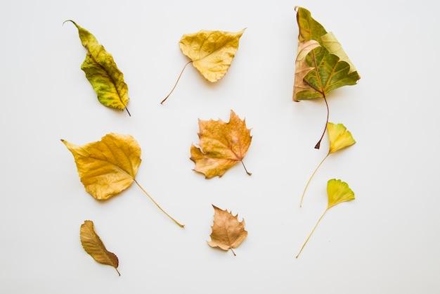 Желтые сухие листовки на белом фоне