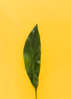 Зеленый лист экзотического растения