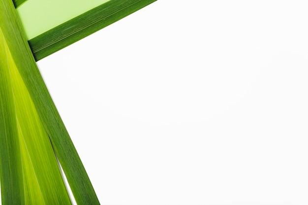 エキゾチックな植物の葉