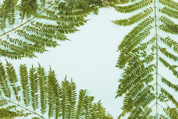 シダの小枝のセット