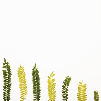 様々なシダの小枝のセット