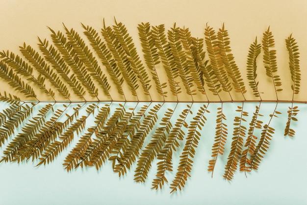 シダの乾燥した小枝