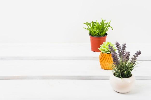 テーブルに植え付けられた植物