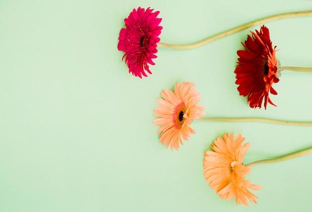 色とりどりの背景に赤と桃のガーベラの花