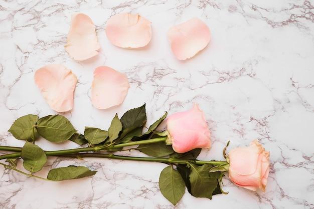 白い大理石のテクスチャの背景に花びらとローズの花