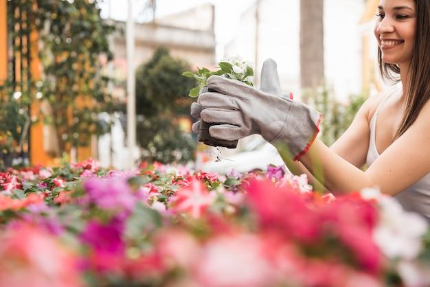 庭で開花苗を保持している女性の庭師のクローズアップ