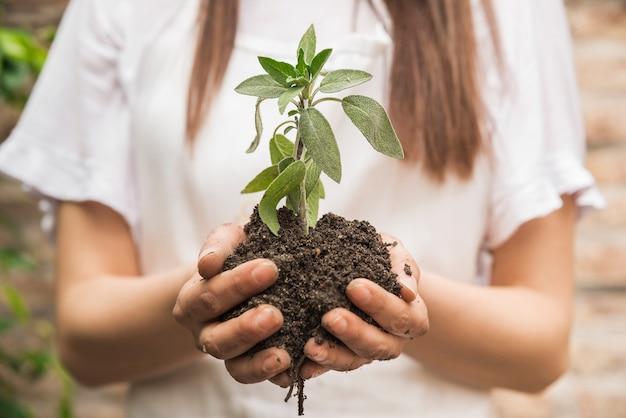 苗木を持つ女性の庭師の手のクローズアップ