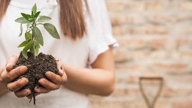 苗を土でつかむ女性の手