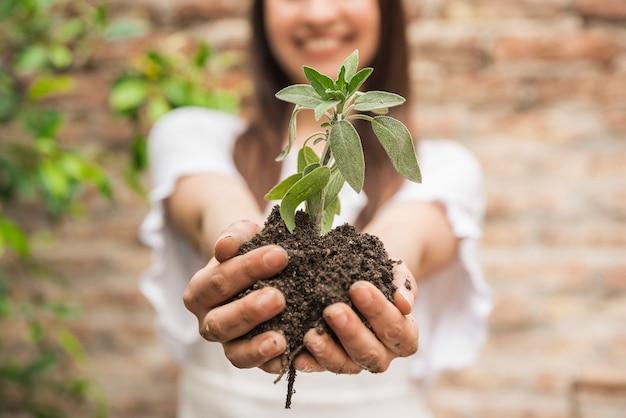 苗を持っている女性の手のクローズアップ