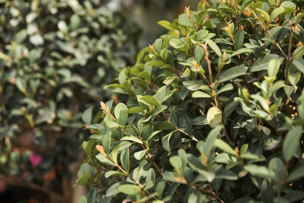 新鮮な緑の葉のクローズアップ