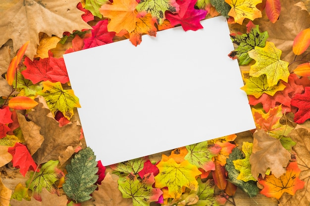 Белый лист между листвой