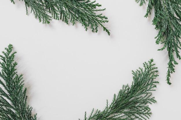 白いテーブルの緑の枝