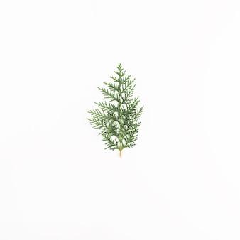 ライトデスクの緑の針葉樹の小枝