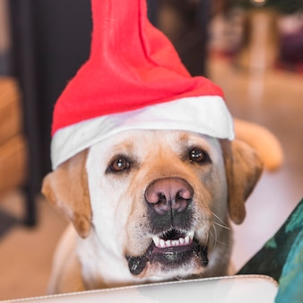 サンタの帽子の犬