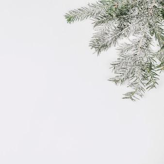 Еловая ветка покрыта снегом