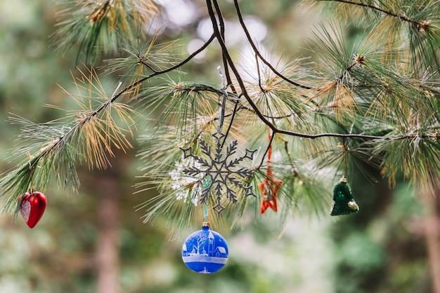 公園の針葉樹の小枝にぶら下がっているクリスマスのおもちゃ