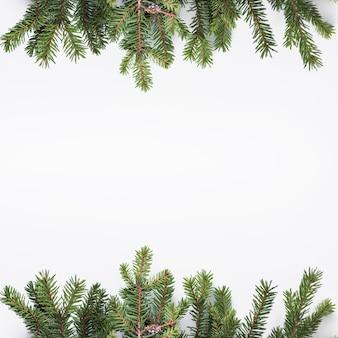 ライトデスクの針葉樹の枝