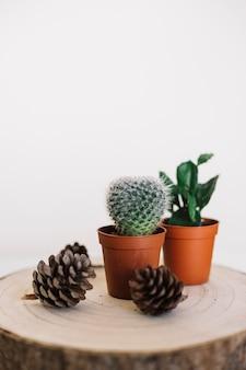 切り株上の植物