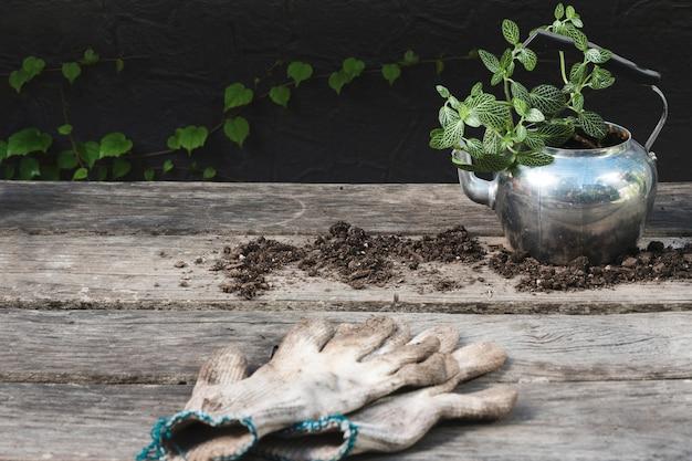 手袋をしたティーポットの植物
