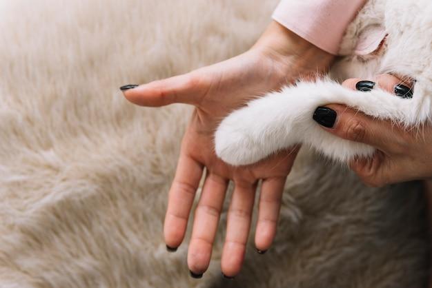 Композиция прекрасных домашних животных с белой кошкой