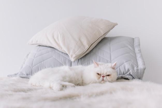 Композиция прекрасных домашних животных с сонной белой кошкой