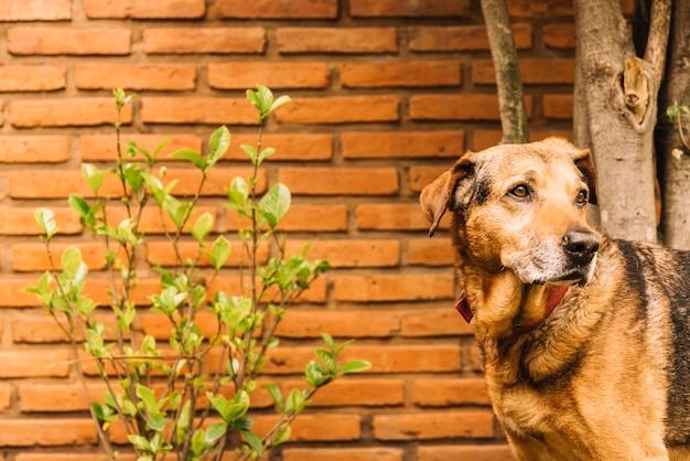 Прекрасная собака позирует в саду