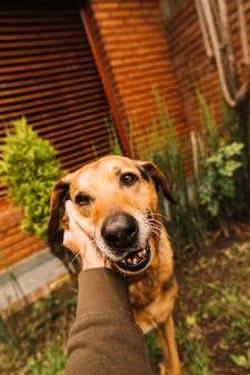 愛らしい犬が庭でポーズをとる
