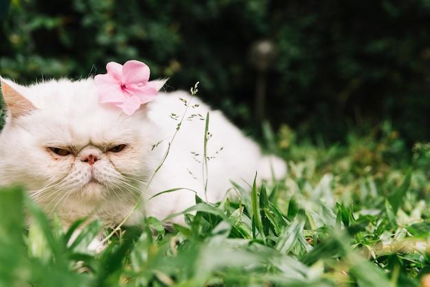 自然の中で素敵な白猫